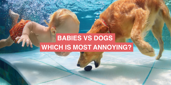 Babies vs Dogs: Which is most annoying?